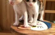Project Tai O Stray Cat