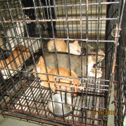 Help 38 Cats Rescued from the Cat Meat Trade