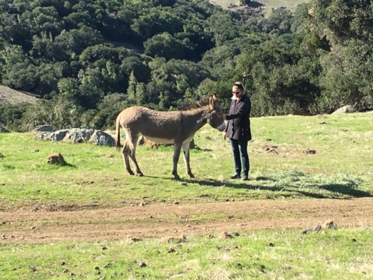 Hannah with the burros