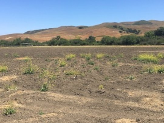 Drought-affected fields-Why we need precious hay