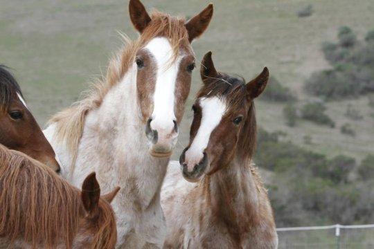 Wild horses at RTF