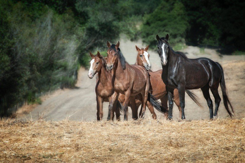 Build a Hay cover for 300-Plus Wild Horses, Burros