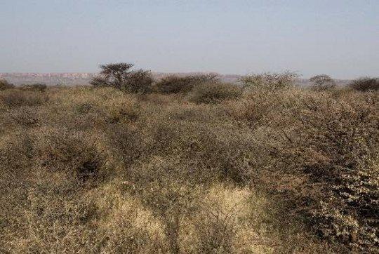 Bush-choked savannah