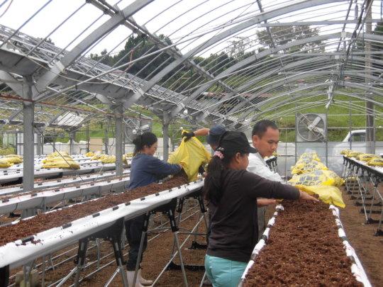 Community Revitalization Project in Kumamoto