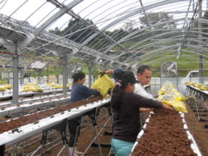 Community Revitalization Project in Kumamoto