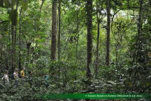 Sibualbuali nest counting