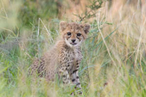 One of Zinzi's Cubs