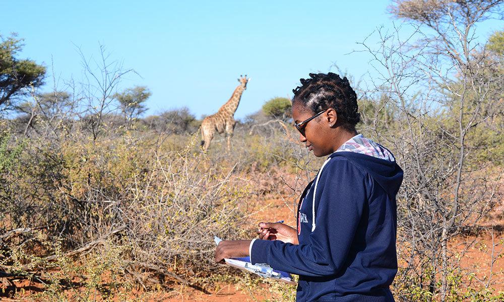 Elizabeth Pius Giraffe Study