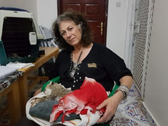 Dr. Laurie Maker Holding Weak Cub in Somaliland