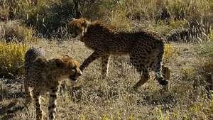 Zinzi and Deborah upon release