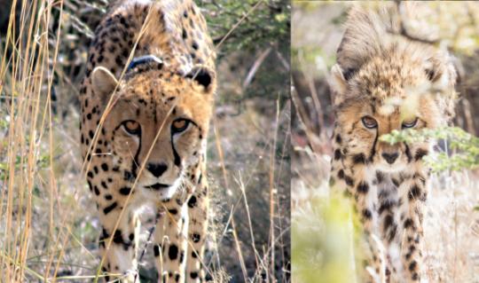Zinzi and cub with same intimidation pose