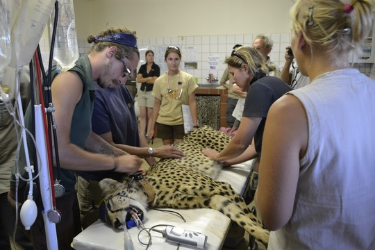 Cheetah Exam