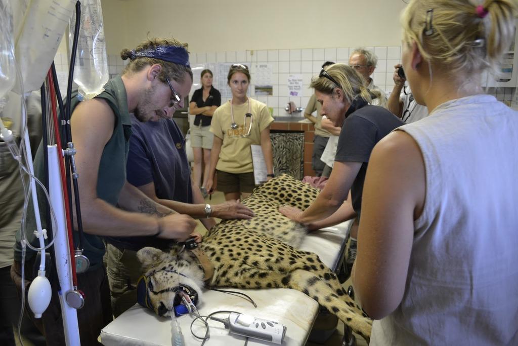 Cheetah Exam