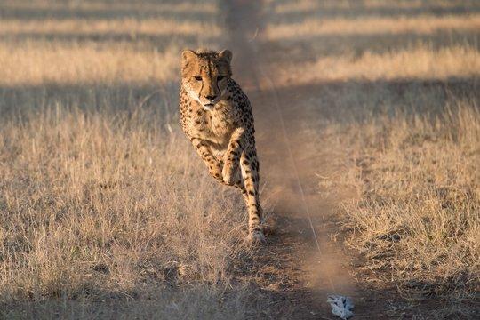 Khay Jay Running