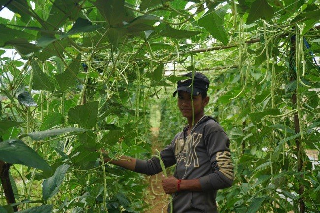 Her son at vegetable farm