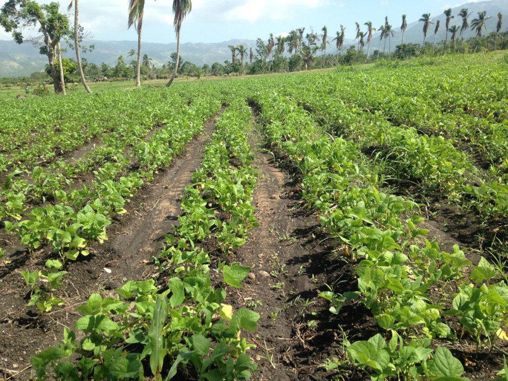 Photo from Lambi Fund of Haiti