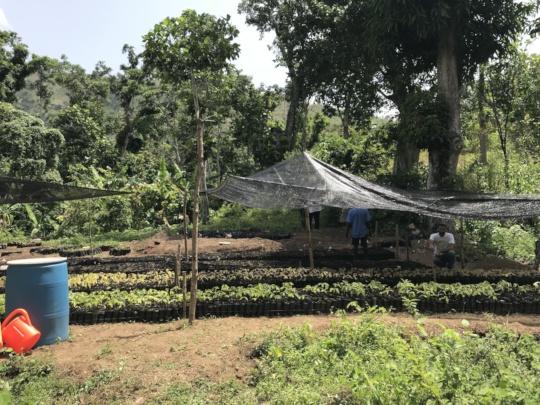 1 of 3 KOKAP seedling sites growing 60,000 plants