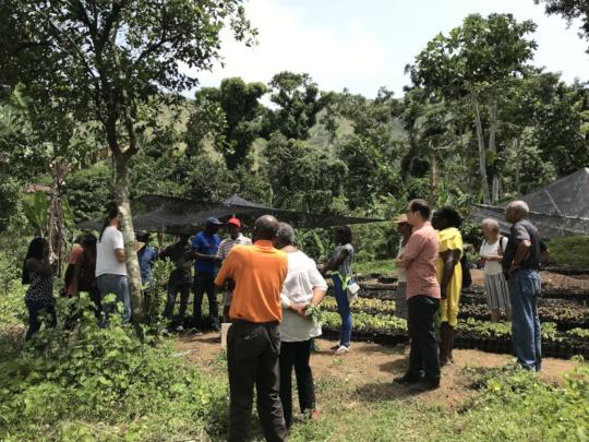 KOKAP & Lambi staff visiting seedling site
