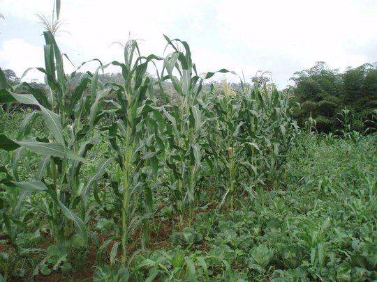 Protect and Invest in Farmers from Ghana