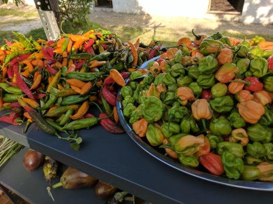 Local food from Haiti