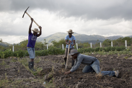 Farmers working to replant