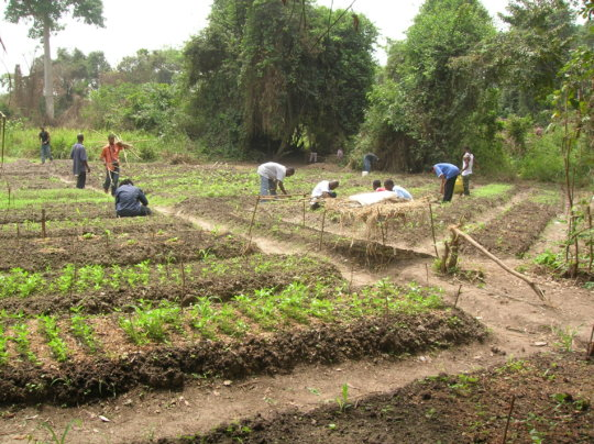 Help Farmers Fight Hunger & Child Abuse - Liberia