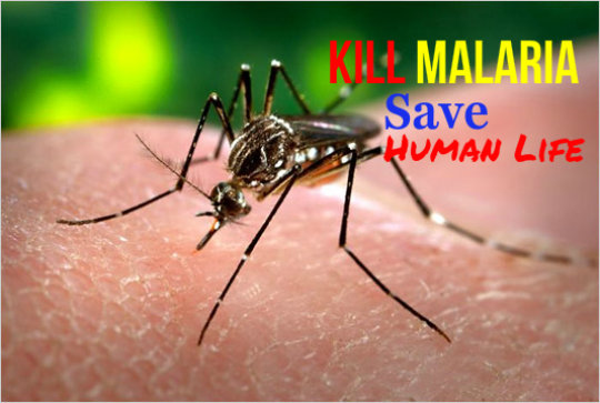 Provide Mosquito Net for Protect Life from Malaria