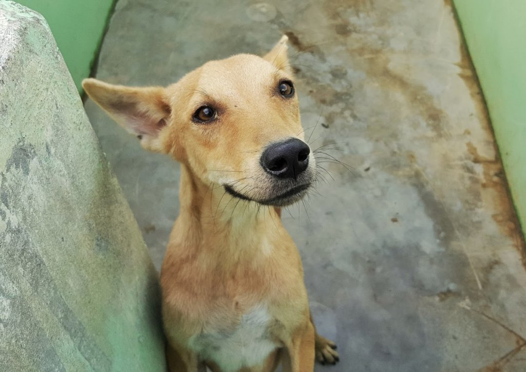 Build 27 Rescue Kennels for Stray Dogs in India