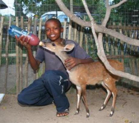 Feeding a young bushbuck
