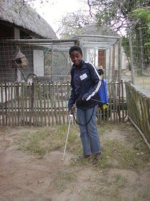 Disinfection of a duiker camp