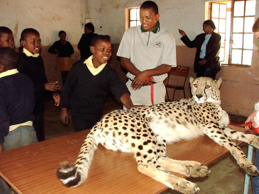 A Retired Cheetah Teaches Poor South African Youth