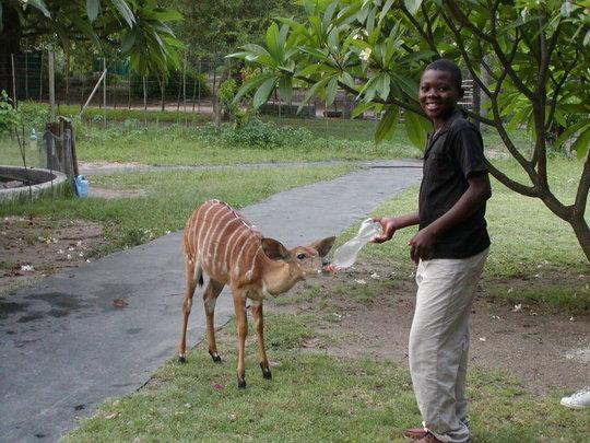 Walter bottle feeding Rusty the Nyala