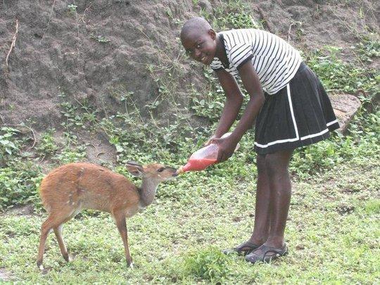 Desiree feeding Maxi the bushbuck