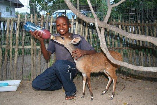 Aaron feeding Maxi the bushbuck