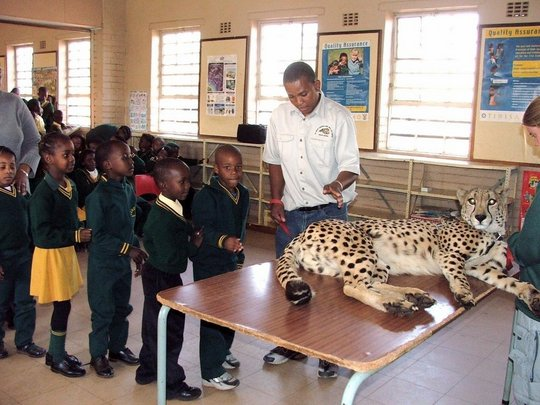 Photo: The Dewildt Cheetah and Wildlife Trust