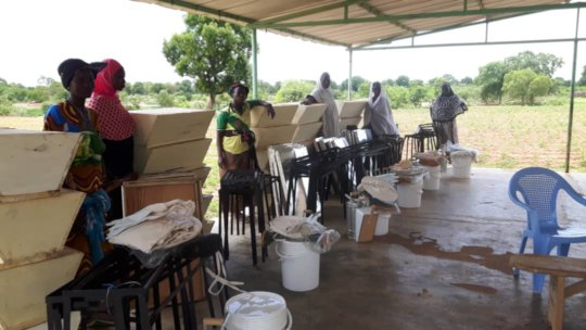 Beehives given in Sissa