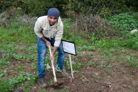 Tulkarem Tree Planting