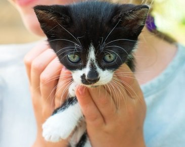 Please Help Us Rescue 10 Pets in 2017!