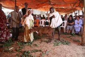 Berhane Hewan: Reducing Child Marriage in Ethiopia