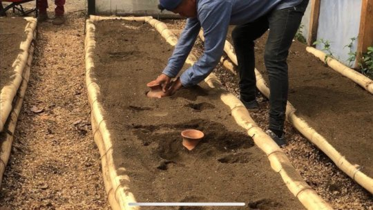 putting in the terracotta ollas for watering