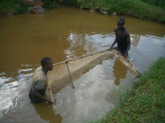 Build Fish Ponds for Reformed Poachers in Uganda