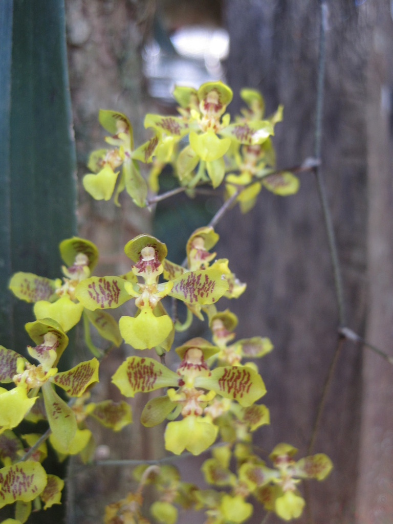 Orchids preserved in the school