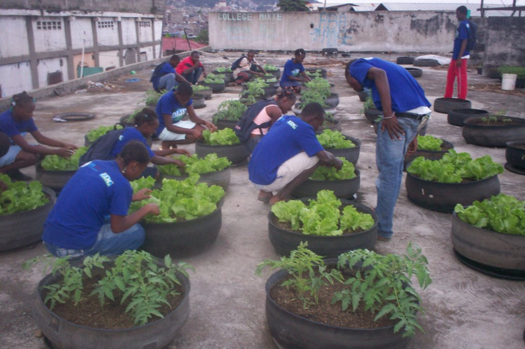 Revive 1000 Haiti Gardens After Hurricane Matthew