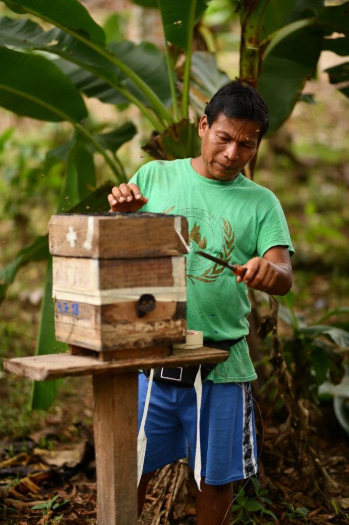 Maijuna Stingless Beekeeper