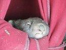 Good Morning Little Wombat