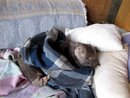 Hope Sleeping