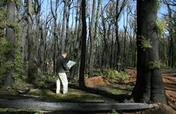 Restore Australia's Forest after the Wildfires