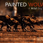 'Painted Wolves: A Wild Dog's Life'.