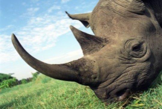 Help Vietnam save endangered wildlife