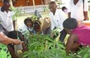 Green Jobs & Rights for Girls in Uganda